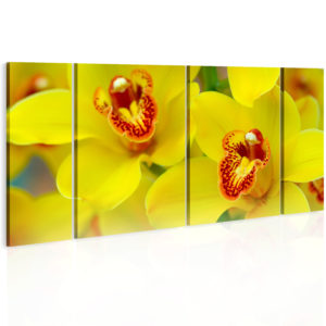 Obraz - Orchids - intensity of yellow color
