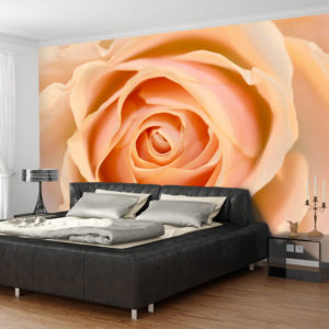 Fototapeta - Peach-colored rose